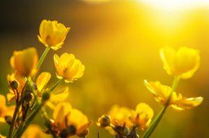 חירות - פרחים באביב